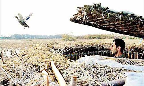 صید آبرو، شکار لقمهای نان