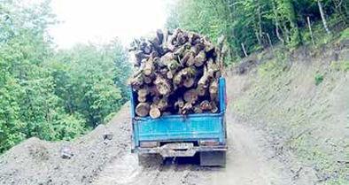 پروندههای قاچاق چوب 20 درصد افزایش داشته است