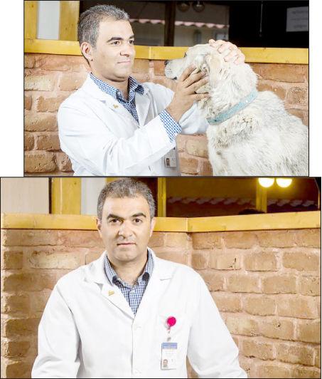 ممنوعیت «سگگردانی» مبنای قانونی ندارد