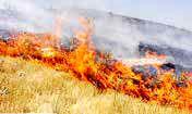 ۵۰۰ هکتار از عرصههای جنگلی در آتش سوخت
