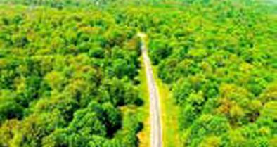 ثبت جنگلهای هیرکانی در فهرست میراث جهانی