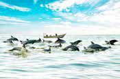 دلفینهای بازیگوش با طعم نان تموشی