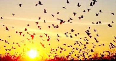 قهر غریزی پرندگان مهاجر با آسمان ایران