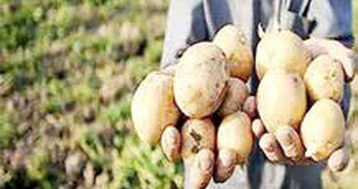 عراقیها محصول ما را ۵ برابر قیمت خرید، میفروشند