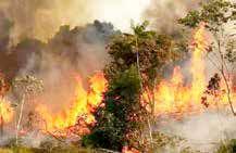 تداوم سوختن جنگلها در آتش ناهماهنگیها و کمبود امکانات