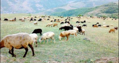 ایران؛ مقام نخست فرسایش خاک در جهان