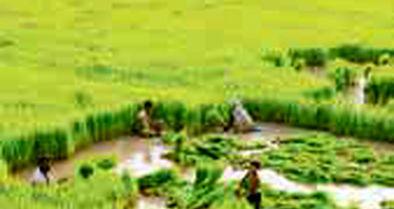 افزایش شکاف جنسیتی مزد شاغلان بخش کشاورزی در سال 1397