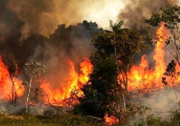 ادامه آتشسوزی در جنگلهای نارک گچساران  و تلاش برای مهار آتش